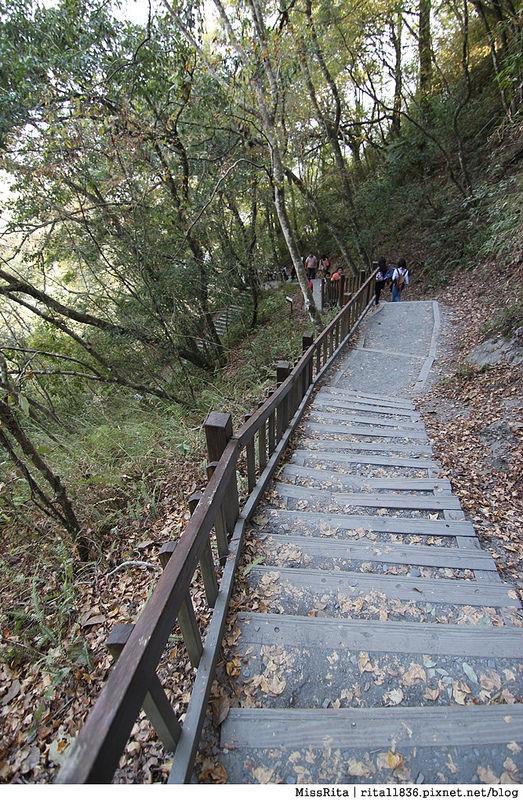 清境觀光巴士 奧萬大森林遊樂區 賞楓33-