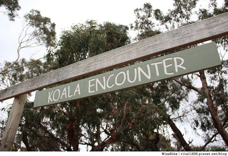 KKDAY 墨爾本自由行 melbourne gowesttours kkDAY墨爾本 墨爾本企鵝 澳洲自助 墨爾本自助 菲利浦島 菲利浦島交通 墨爾本必去 墨爾本酒莊 月光野生動物 Nobbies 墨爾本企鵝歸巢 墨爾本一日遊 菲利普島一日遊,小企鵝歸巢遊行42