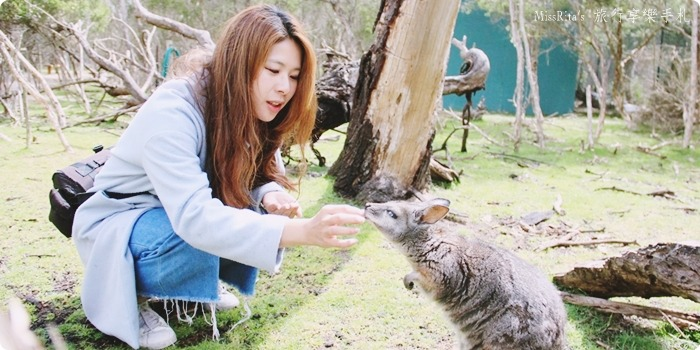 KKDAY 墨爾本自由行 melbourne gowesttours kkDAY墨爾本 墨爾本企鵝 澳洲自助 墨爾本自助 菲利浦島 菲利浦島交通 墨爾本必去 墨爾本酒莊 月光野生動物 Nobbies 墨爾本企鵝歸巢 墨爾本一日遊 菲利普島一日遊,小企鵝歸巢遊行0-