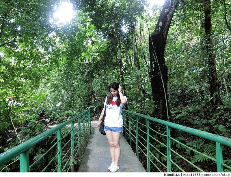 馬來西亞自由行 馬來西亞 沙巴 沙巴自由行 沙巴神山 神山公園 KinabaluPark Nabalu PORINGHOTSPRINGS 亞庇 波令溫泉 klook 客路 客路沙巴 客路自由行 客路沙巴行程2