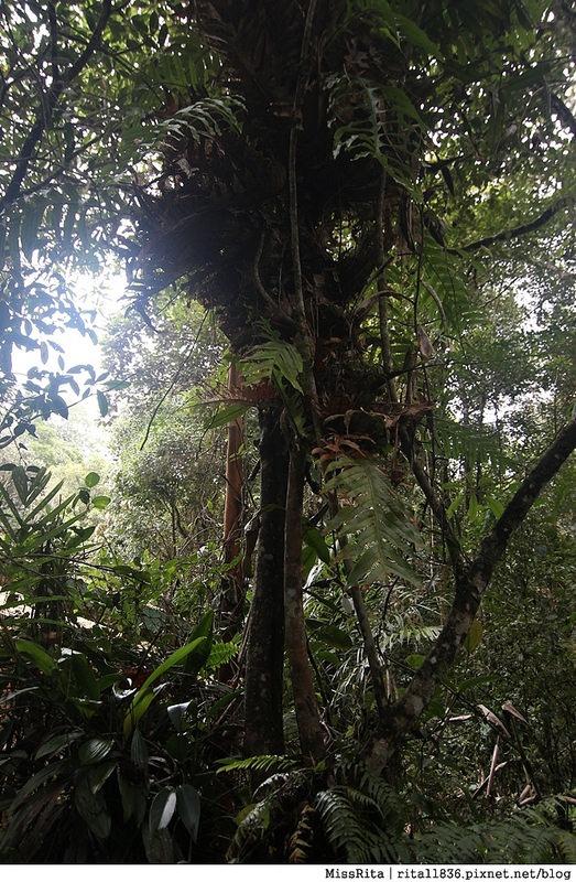 馬來西亞自由行 馬來西亞 沙巴 沙巴自由行 沙巴神山 神山公園 KinabaluPark Nabalu PORINGHOTSPRINGS 亞庇 波令溫泉 klook 客路 客路沙巴 客路自由行 客路沙巴行程26